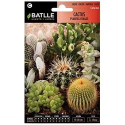 Semillas de cactus y...
